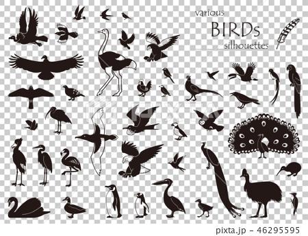 鳥のシルエット素材集 46295595