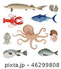 シーフード 海の幸 魚介類のイラスト 46299808