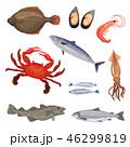 シーフード 海の幸 魚介類のイラスト 46299819