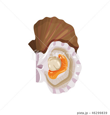 Detailed flat vector icon of open scallop. Edible marine mollusk. Tasty sea product. Seafood theme 46299839