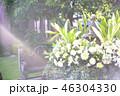庭 朝 花の写真 46304330