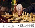 チェス 女性 メスの写真 46314445