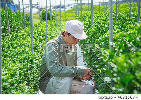 農業 男性 46315677