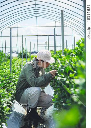 農業 男性 46315681