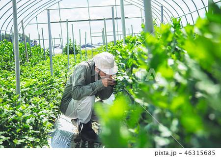 農業 男性 46315685