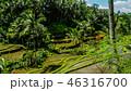 緑 グリーン 植物の写真 46316700