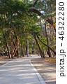 散歩道 公園 海の写真 46322280