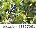 シャリンバイ 実 果実の写真 46327061