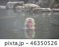 サル温泉 46350526