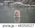 サル温泉 46350527