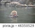 サル温泉 46350529