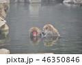 温泉に入るニホンザル 46350846