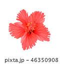 花 お花 フラワーの写真 46350908