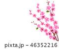 背景 花 小枝のイラスト 46352216