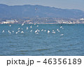 冬 琵琶湖 鳥の写真 46356189