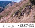 《神奈川県》湯河原梅林・梅の宴 46357433