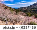 《神奈川県》湯河原梅林・梅の宴 46357439