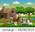 動物 農場 アヒルのイラスト 46362910