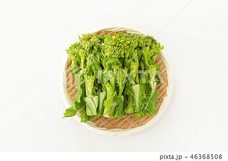 菜の花 46368508