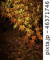 京都の秋 46371746