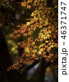 京都の秋 46371747