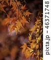 京都の秋 46371748