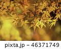 京都の秋 46371749