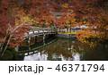 京都の秋 46371794