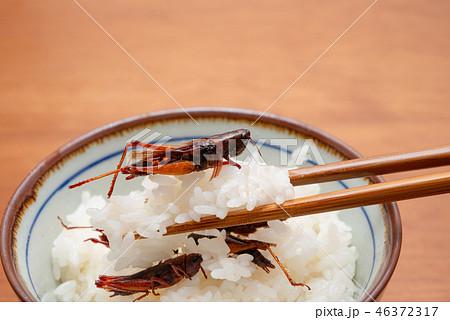 ご飯とイナゴの佃煮 46372317