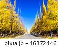 東京 明治神宮外苑の銀杏並木 46372446