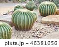 さぼてん サボテン 仙人掌の写真 46381656
