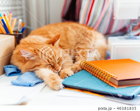 Cute ginger cat is sleeping among office supplies 46381835