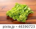 野菜 食材 菜の花の写真 46390723
