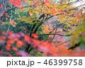 紅葉 秋 木の写真 46399758