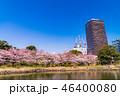 旧芝離宮恩賜庭園 桜 春の写真 46400080