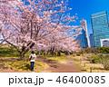 旧芝離宮恩賜庭園 桜 春の写真 46400085