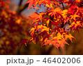 紅葉 46402006