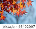 紅葉 46402007