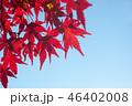 紅葉 46402008