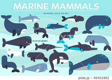 Sea mammals animal collection icons set. Vector fish illustration in ocean life background. Marine 46402862