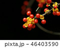 ウメモドキ 実 植物の写真 46403590
