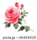 花 薔薇 ピンクのイラスト 46404020
