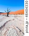 切れた 死んだ 樹木の写真 46404330