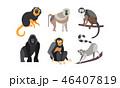 さる サル 猿のイラスト 46407819