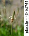 お花 フラワー 咲く花の写真 46408765
