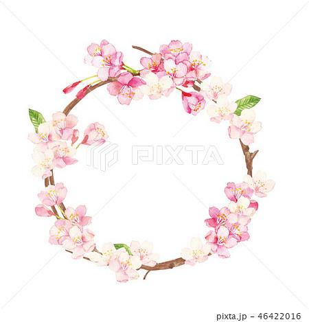 桜のリース 水彩イラスト 46422016