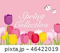 チューリップ 花 蝶のイラスト 46422019