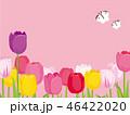 チューリップ 花 花畑のイラスト 46422020