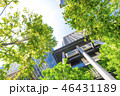 高層ビル ビル 新緑の写真 46431189