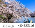 井の頭恩賜公園 春 桜の写真 46435316